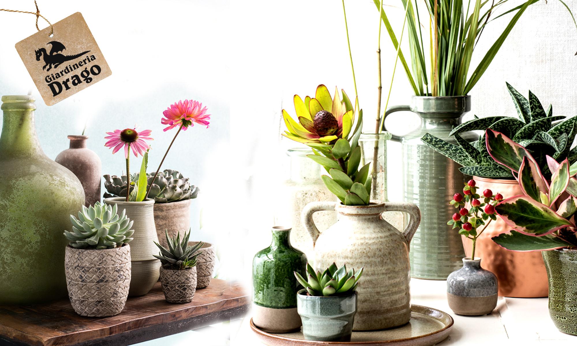 fiori freschi da giardineria drago